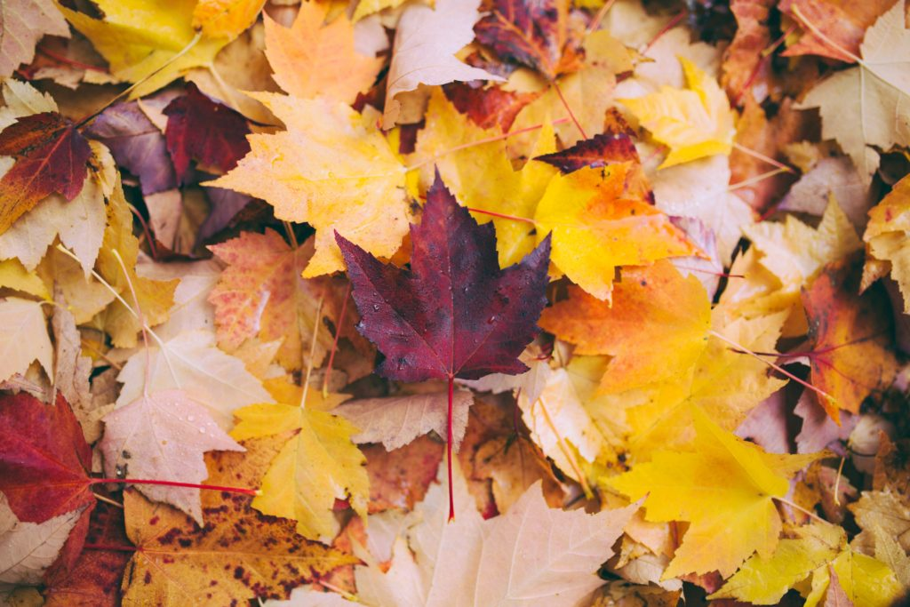 How to plan + take the perfect fall photos